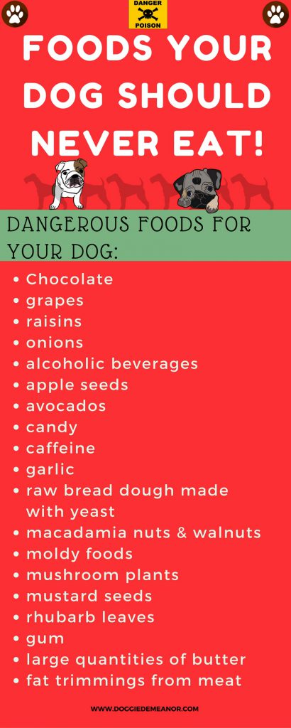 What foods are bad for dogs
