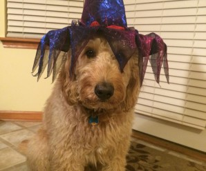 My Dog Ate The Halloween Candy!
