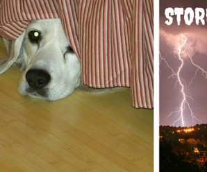 Why Are Dogs Afraid of Thunder?
