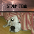 Why are dogs afraid of thunder