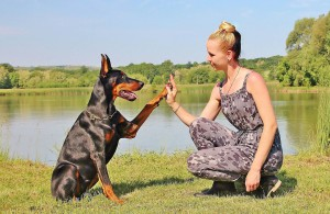 10 Simple Tricks To Teach Your Dog