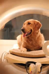 Dog brain study with MRI