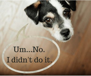 Stop Dog From Peeing On Carpet – Help!