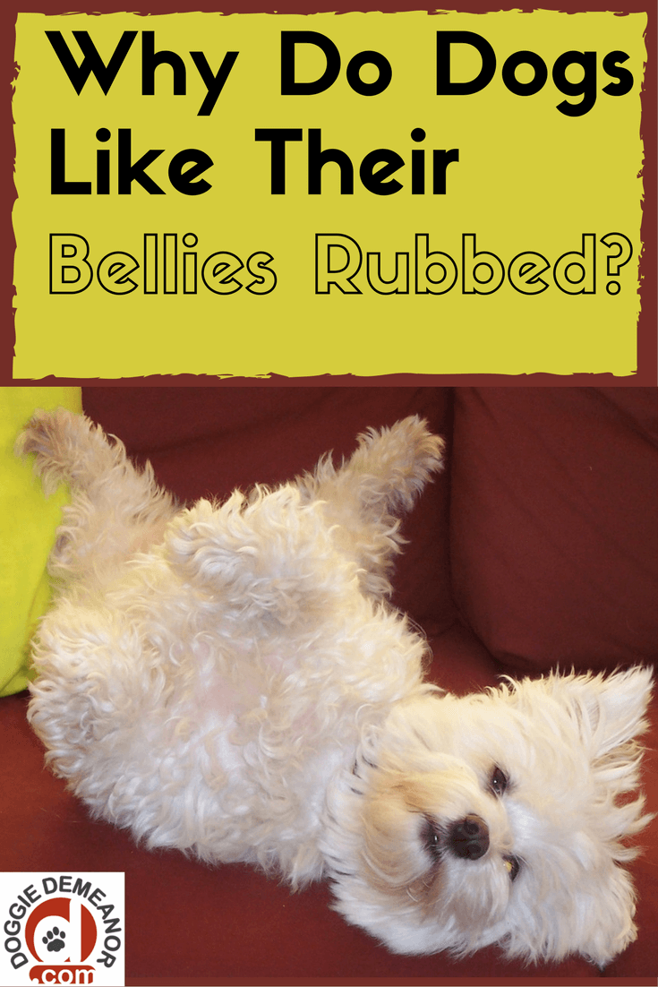 do all dogs like their bellies rubbed