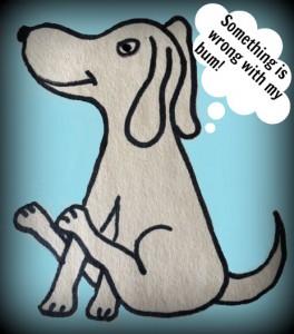 Why do dogs drag their bottom along the floor?