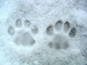 Protect dogs paws from snow