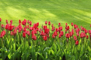 Plants that are poisonous for dogs
