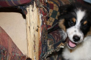 How to stop a dog from chewing furniture