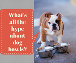 Best dog food bowls