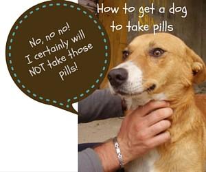 Dog pills (1)