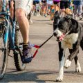 best bike dog leash-Dogger Jogger Review