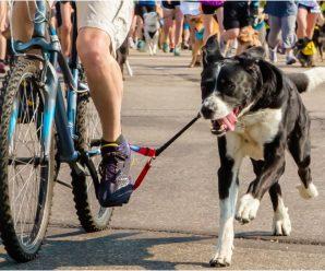 Best Bike Dog Leash-Dogger Jogger Review