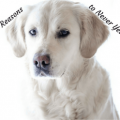 4 reasons to never yell at your dog