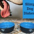 slime-on-dog-dishes
