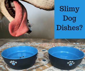 Slime on Dog Dishes – What is it?