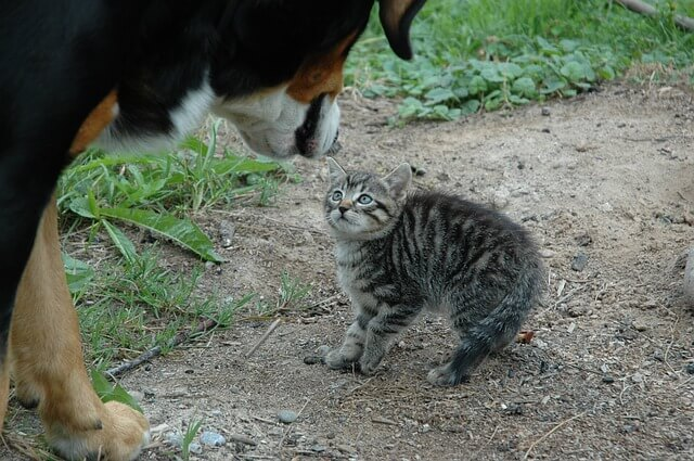 Cats and dogs living together-can they get along
