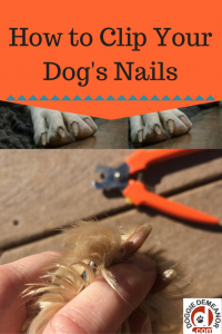 Can Dogs Feel Pain In Their Nails