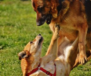 Is My Dog Playing or Fighting – How To Tell The Difference