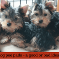 are indoor pee pads for dogs a bad idea