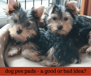 Are Indoor Pee Pads For Dogs A Bad Idea?