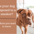 Will Smoking Harm My Dog? Surprising Facts You Didn't Know.