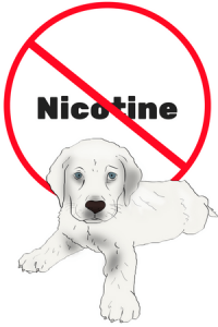Nicotine poisoning in dogs