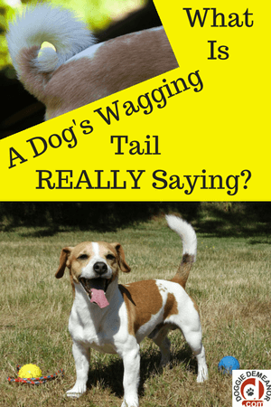 What does it mean when a dog wags its tail