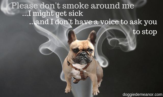 Will smoking harm my dog