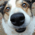 Things you should know about your dogs nose