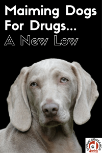 hurting dogs to score drugs