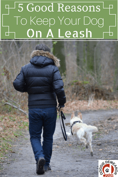 5 good reasons to keep your dog on a leash