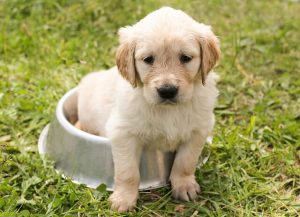 What to buy a new puppy