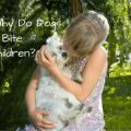 Why do dogs bite children