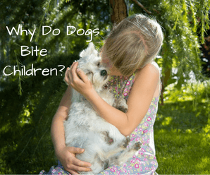 Why Do Dogs Bite Children? And, How To Prevent It