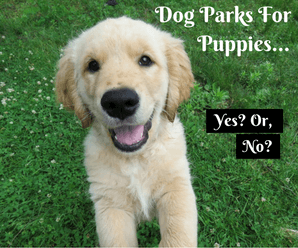 Is It Okay To Bring My Puppy To The Dog Park?
