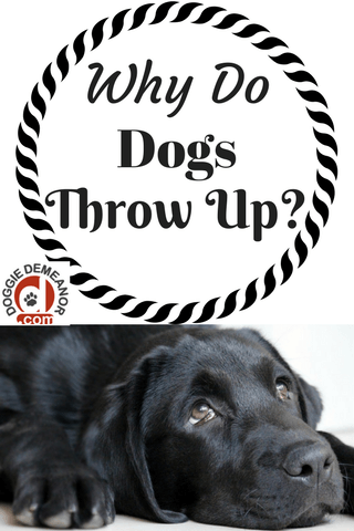 Why do dogs throw up