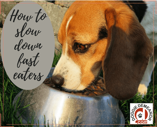 how to slow down dog eating