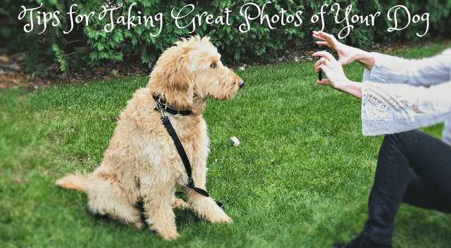 Tips for taking great photos of your dog