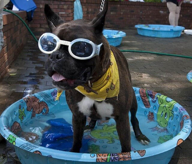 how to keep your dog cool in the summer