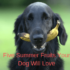 Five Summer Fruits Your Dog Will Love