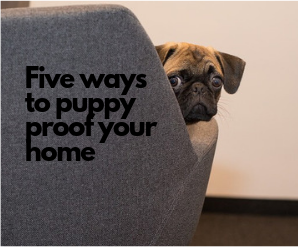 Five Ways To Puppy Proof Your Home